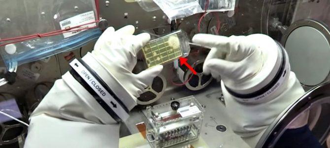 Astronautas encontram micróbios desconhecidos no espaço