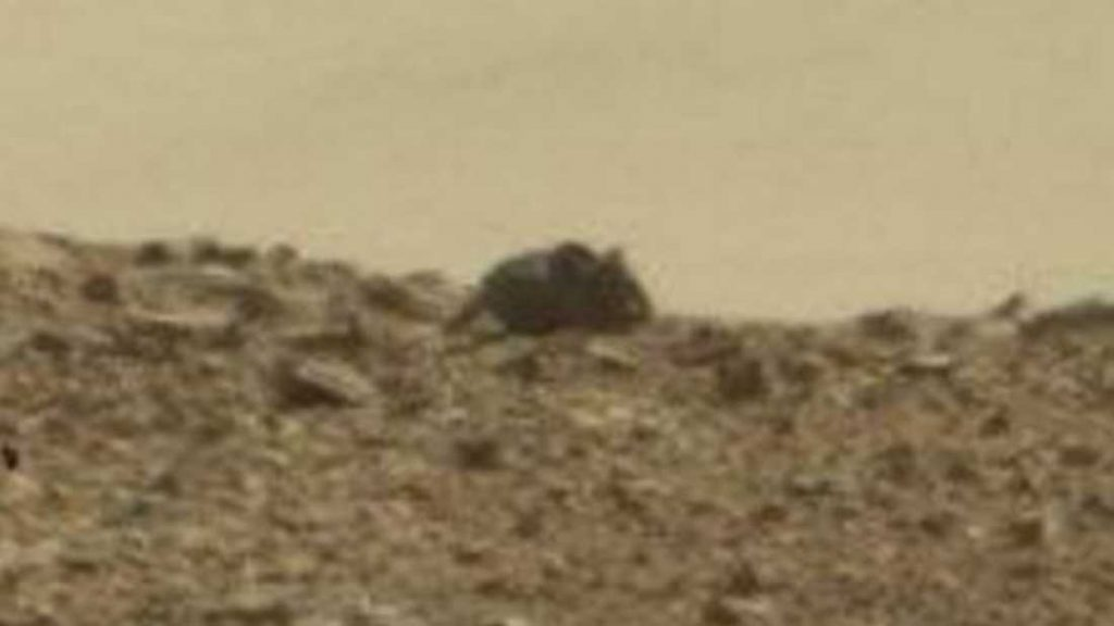 extra_large-1464370117-3986-mouse-spotted-on-mars